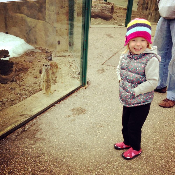 Kate (a friendly meerkat) posing for a picture at the zoo!