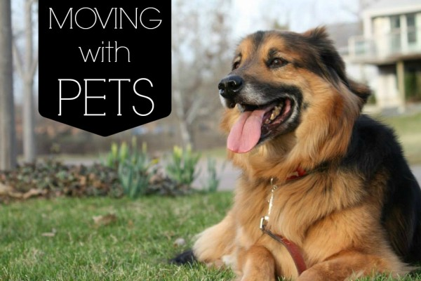 Homes.com:  Tips for moving with pets by Dusty Rogers from All Things G&D